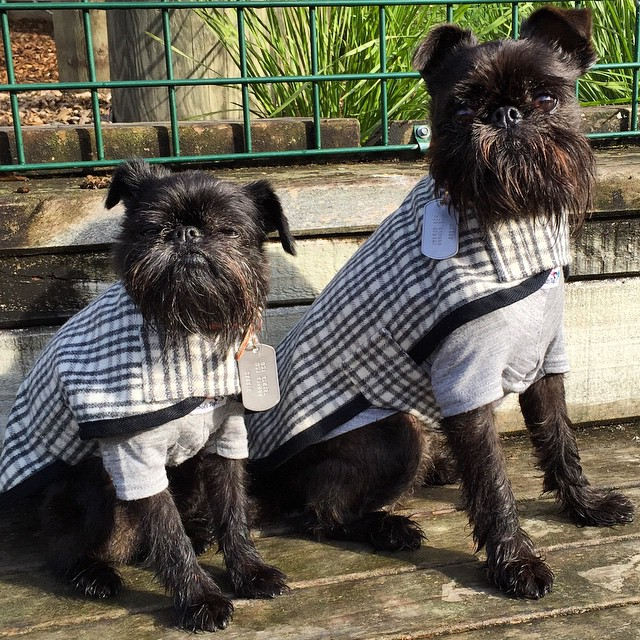 Mr Soft Top Woolen Dog Coats