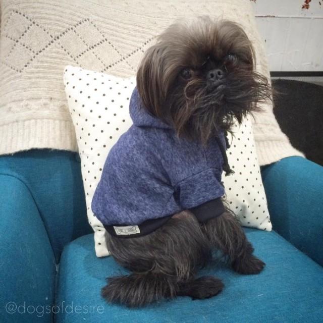 Dogs of Desire Designer Dog Apparel