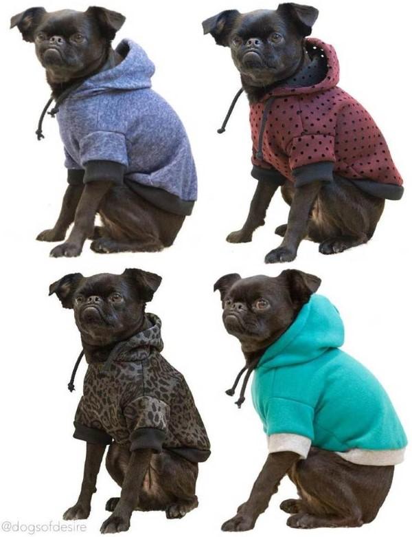 Dogs of Desire Designer Dogwear
