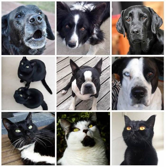 All Black Pets
