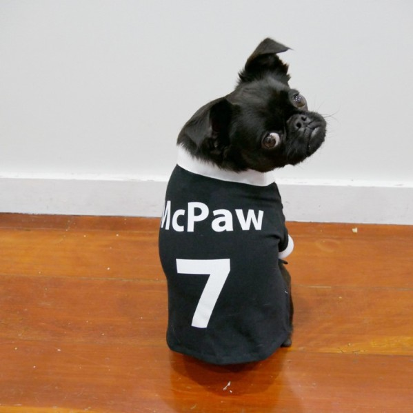 Rugby Shirt For Dog: Lookbook: Paw Blacks